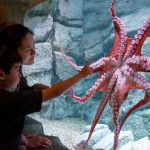 Things to Do in Monterey in California
